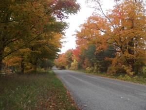 fall_scene-300x225